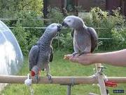 playing parrots for loving and caring family