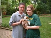 mooie bulldog puppy voor adoptie,